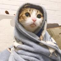 南冥有只猫